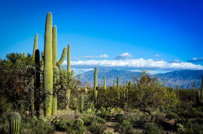 Arizona - Phoenix